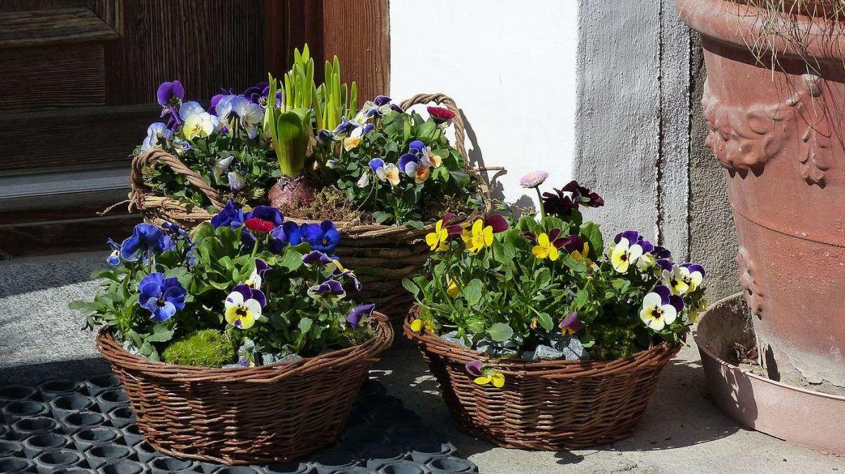 Las floristas mainan a lur cliantella las fluors fin davant la porta d'chasa (fotografia: Flurin Andry).