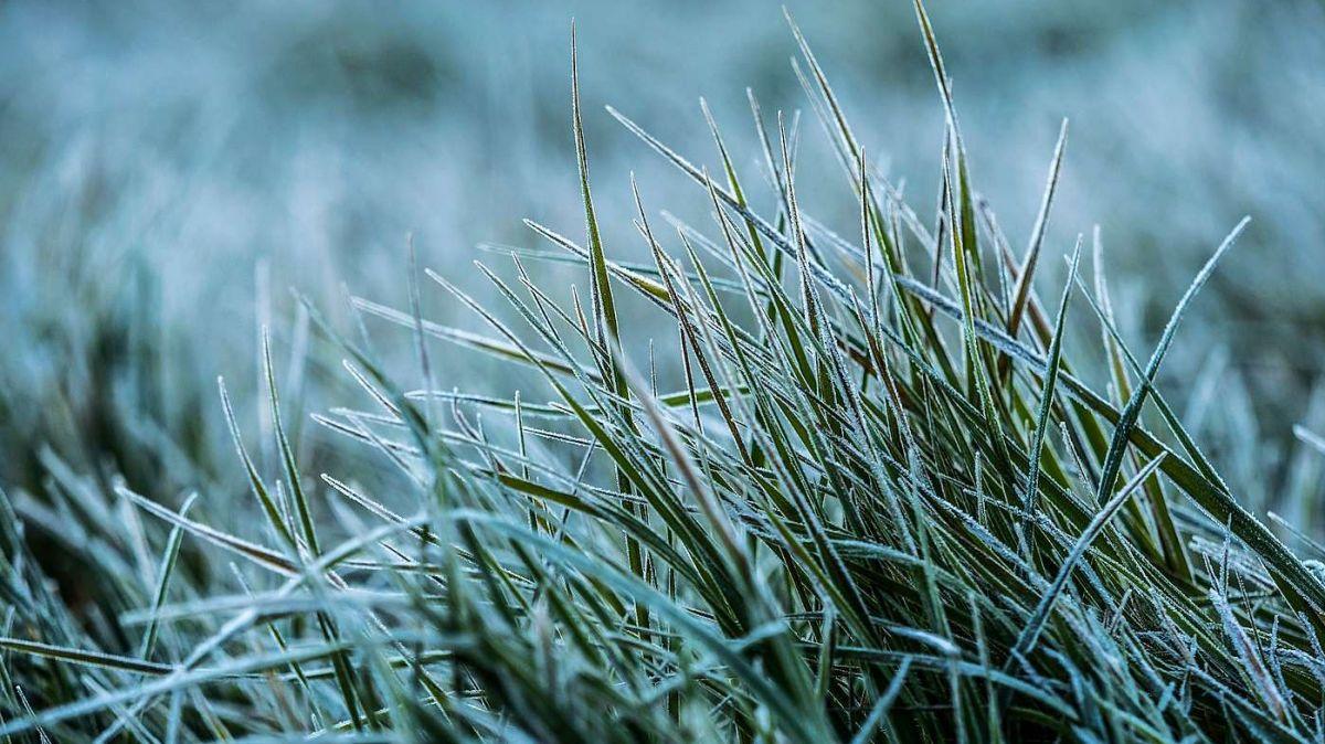 Suvenz portan ils dis dals senchs da glatsch temperaturas fraidas e faun dschler il terrain (fotografia: Daniel Zaugg).