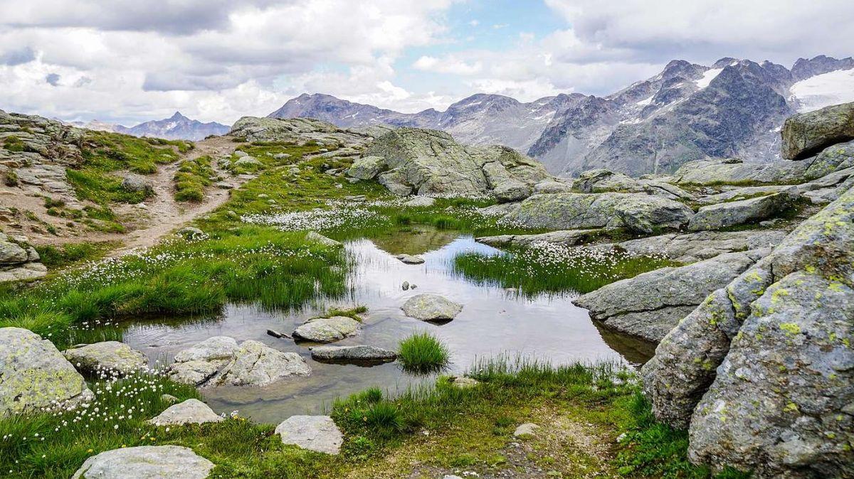 er Felsenteich auf der Fuorcla Surlej auf 2753 Meter über Meer gilt als der europaweit höchstgelegene Laichplatz des Grasfrosches. Tatsächlich schwimmen aktuell vereinzelte Kaulquappen im Teich. Foto: Jon Duschletta