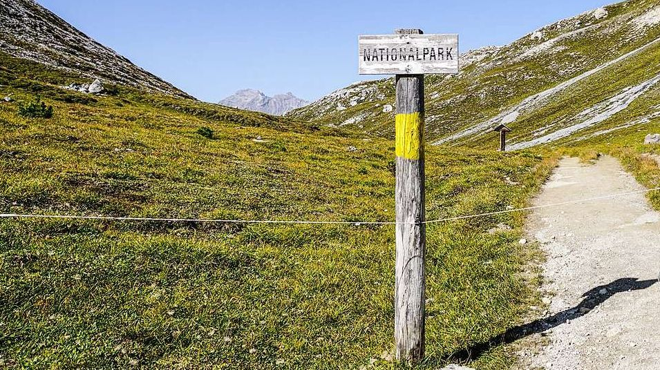 Parc Naziunal Svizzer vers Munt Chavagl. fotografia: Jon Duschletta