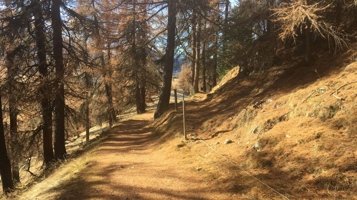 Auf einem Teilstück der Via Engiadina zwischen Silvaplana und Sils sollen Biker und Wanderer künftig getrennte Wege gehen.
