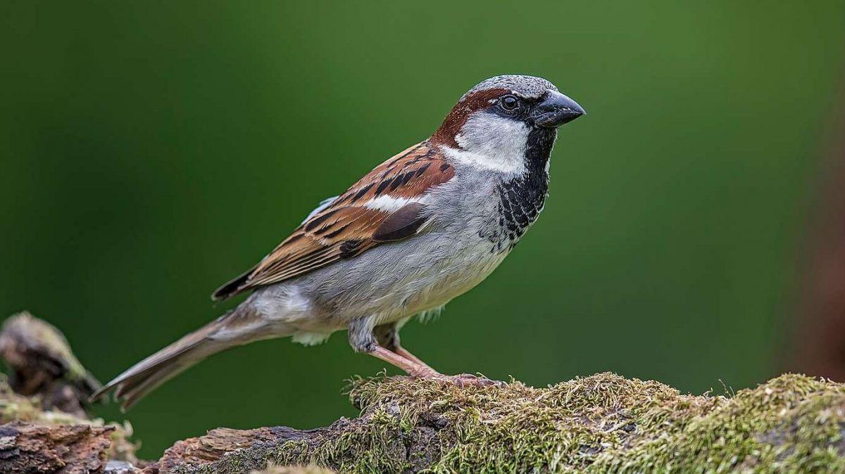 Foto: Vogelwarte Sempach/Marcel Burkhardt