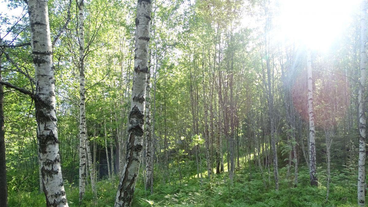 Die Vögel zwitscherten, und es fühlte sich sehr feucht und warm an, wenn die Sonne in den Wald schien ... Foto: Reinhild Hauri