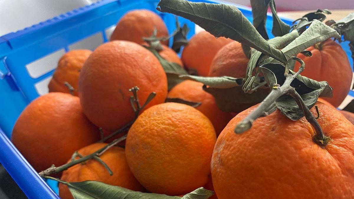 Las föglias chi pendan amo vi dals früts conferman la frais-chezza e qualità (fotografia: Nicolo Bass).