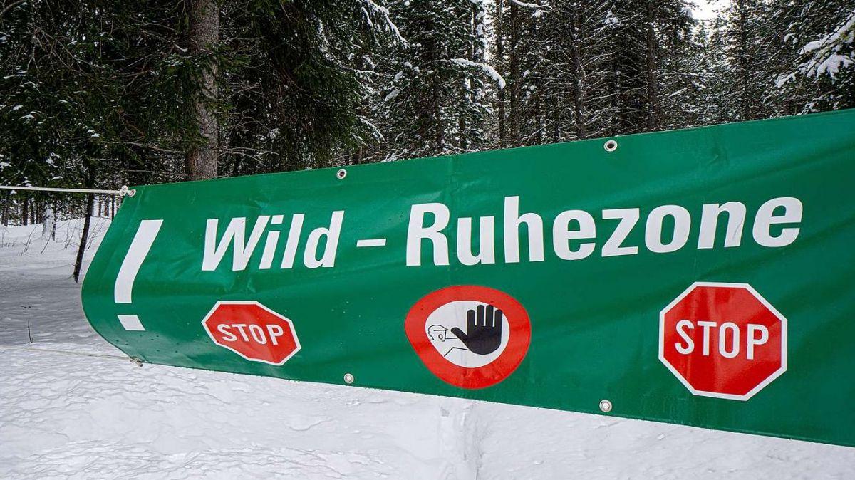 Die Wildruhezonen sind deutlich markiert: Diese sollten auf keinen Fall betreten werden, um das Wild in den Wintereinständen nicht zu stören. Foto: Reto Stifel