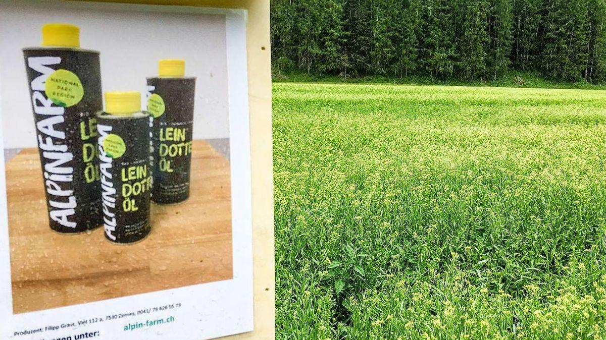Leindotteröl-Produktion aus dem Unterengadin. Foto: Jon Duschletta