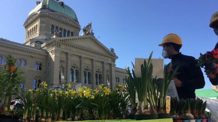 Der Berner Märit ist ein Unikum: Seit Jahren Woche für Woche vor dem Parlament aufgebaut (Foto: Ruth Bossart).