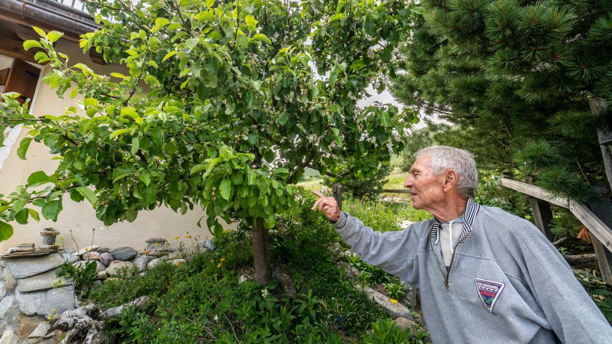 Walter Trachsler und sein selbstgezogener Apfelbaum.  Foto: Daniel Zaugg
