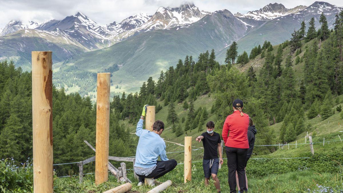 Schüler des Lyceum Alpinum waren letzte Woche auf der Alp Arpiglia, um dort einen Zaun zu bauen. Der langjährige Lehrer Peter Frehner leitete den Einsatz. Fotos: Annika Veclani