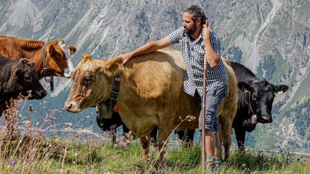 Der Hirte Jules Denner ist den Sommer über zuständig für 90 Kühe, Kälber und Rinder.