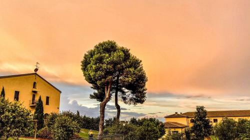 Poggio all'Agnello, Toscana. Foto: Jon Duschletta