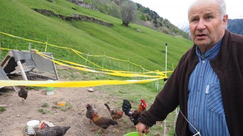 Felix Brügger betreibt in Soglio einen landwirtschaftlichen Kleinbetrieb mit Hühnern, Ziegen, Obst, Gemüse und Kastanien. Er befürwortet beide «Agrarinitiativen».