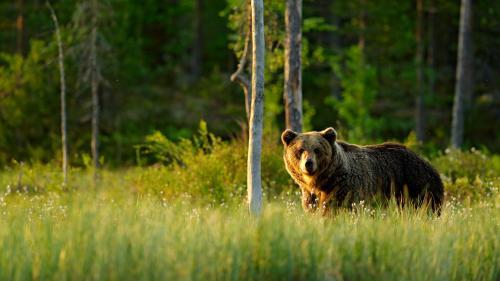 Symbolfoto: Shutterstock.com/Ondrej Prosicky