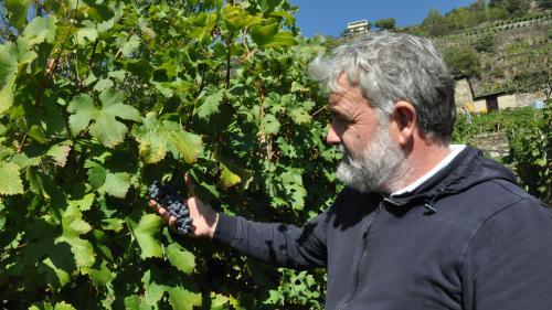Mamete Prevostini inmitten seines Weinbergs. Der Winzer gehört zu den ersten Veltliner Weinbauern, die konsequent auf Qualität setzten. Foto: Marie-Claire Jur
