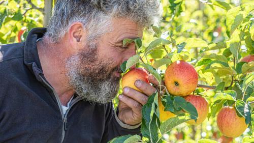 Florin Pichler prüft den Reifegrad seiner Äpfel.    Foto: Daniel Zaugg